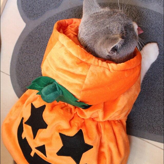 Halloween Costumi Gatto Gatto Caldo Costume del Cappotto Zucca Devil Cat  Vestiti Con Cappuccio Della Tuta beaf6804cb0