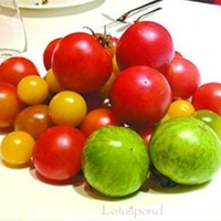 30 Mix Tomato Seeds rich flavor and rich in VC vegetable C096