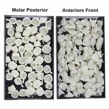 2 Kotak Bahan Gigi Campuran Temporary Crown Anteriors Fron & Molar Posterior Alam Warna Dokter Gigi Produk Gratis Pengiriman