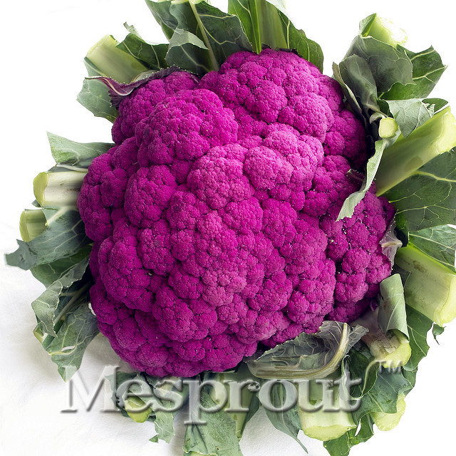 50PCS Nutritious Purple Cauliflower Seeds -LOW CARB! rich in Anthocyanin Very Easy plant garden Natural Organic Green Food