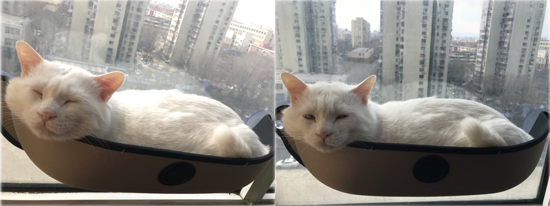 Original Cat Window Bed