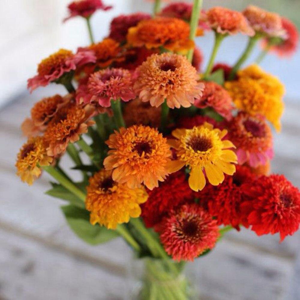 Aliexpress.com : Buy Mixed Zinnia seeds of perennial flower garden ...