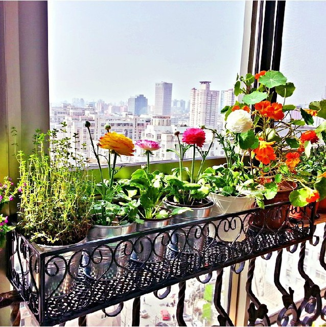 C Iron Flower Balcony Railing Fence Flower Hanging Pot Rack Wall Outdoor  Plant Stand