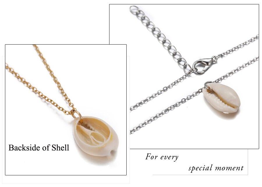 shell3 (2)