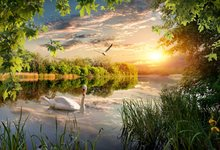 Laeacco Natural Wonderland River Duck Tree Dusk Portrait View Photo Backgrounds Photocall Photography Backdrops For Photo Studio(China)