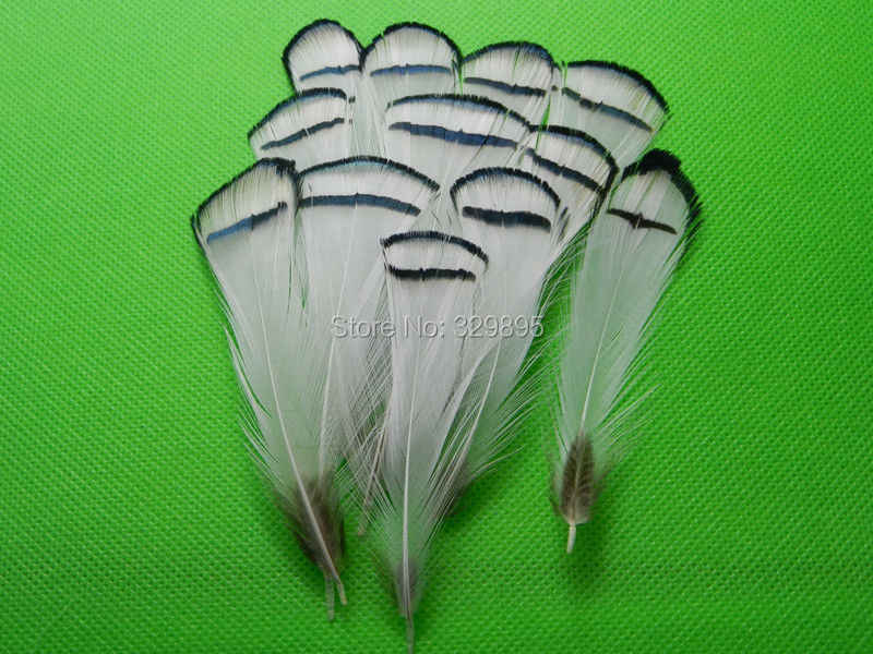 Scarce 10pcs high quality natural cover pheasant chicken feathers plumes 4-9cm for DIY crafts mask Headwear  decoration