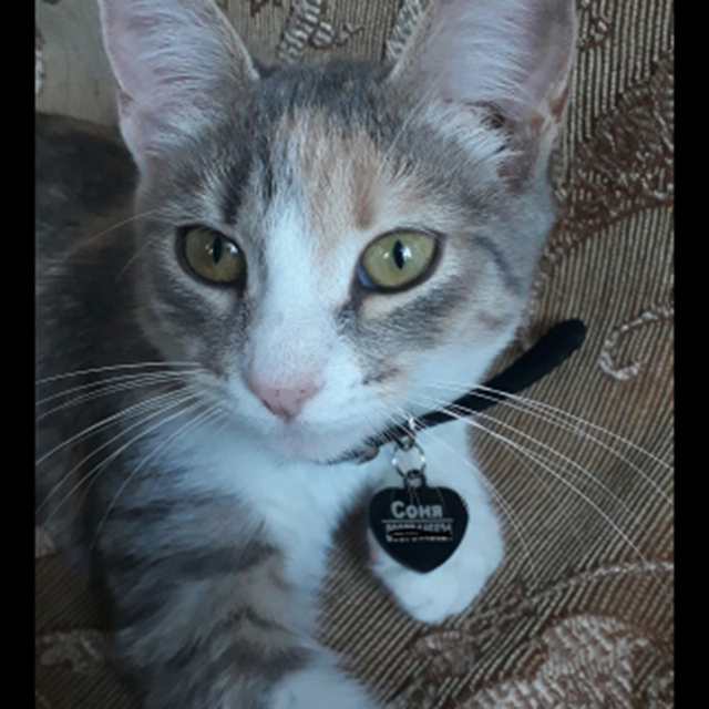 Free Engraving Customized Cat Dog ID Tag Collar Pet Charm Name Pendant Bone Necklace Puppy Accessory 3