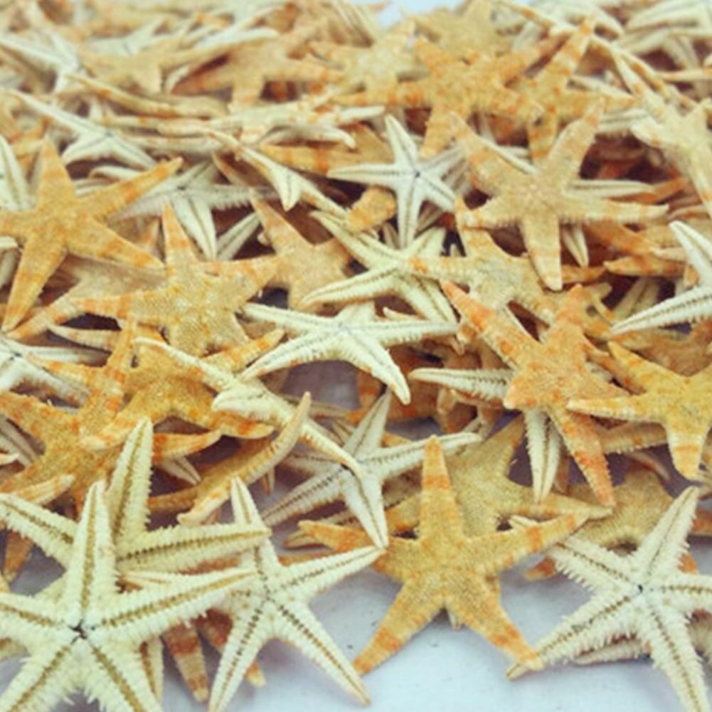 100Pcs Trinket Beach Craft Natural Beautiful Wedding Stars Photography Prop Portable Starfishes Mini Decoration Sea DIY