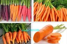 Морковь семена 100 семена популярные семена овощных культур для дома сад посадки