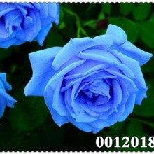ab1455c4b Galeria de blue rose plant por Atacado - Compre Lotes de blue rose ...
