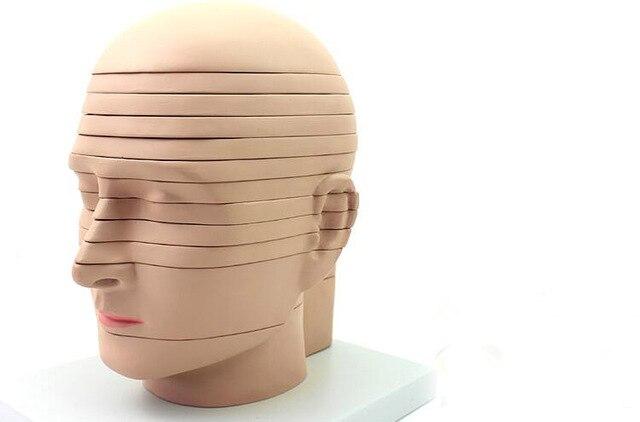 Menschlichen kopf anatomie Brain Modell CTMRI gehirn imaging ...
