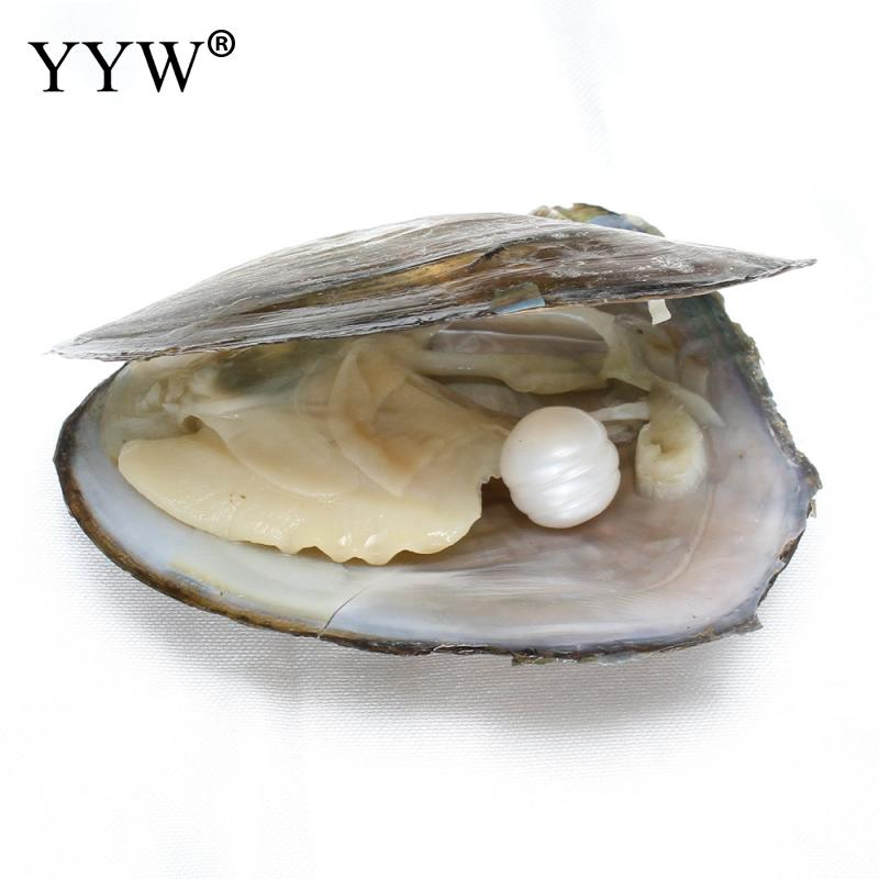 Freshwater Vacuum-pack Oyster Wish Pearls Pearl Mussel Shell with Pearl Inside gift beads for jewelry making 12-13mm size