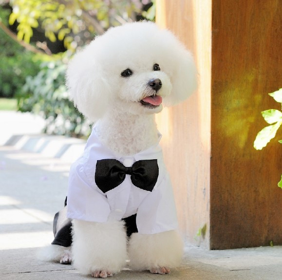 White Black Dog Clothes Dogs Wedding Dresses Puppy Outfit Mascotas Perros Tuxedo Pet Jumpsuit Little Clothing For Pets Wx01 In Jumpsuits Rompers From