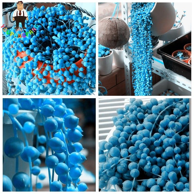 100 Pcs/Lot Blue Pearl Chlorophytum Office Desktop Flowers Succulents Anti-Radiation Computer Potted Plants Purify Air