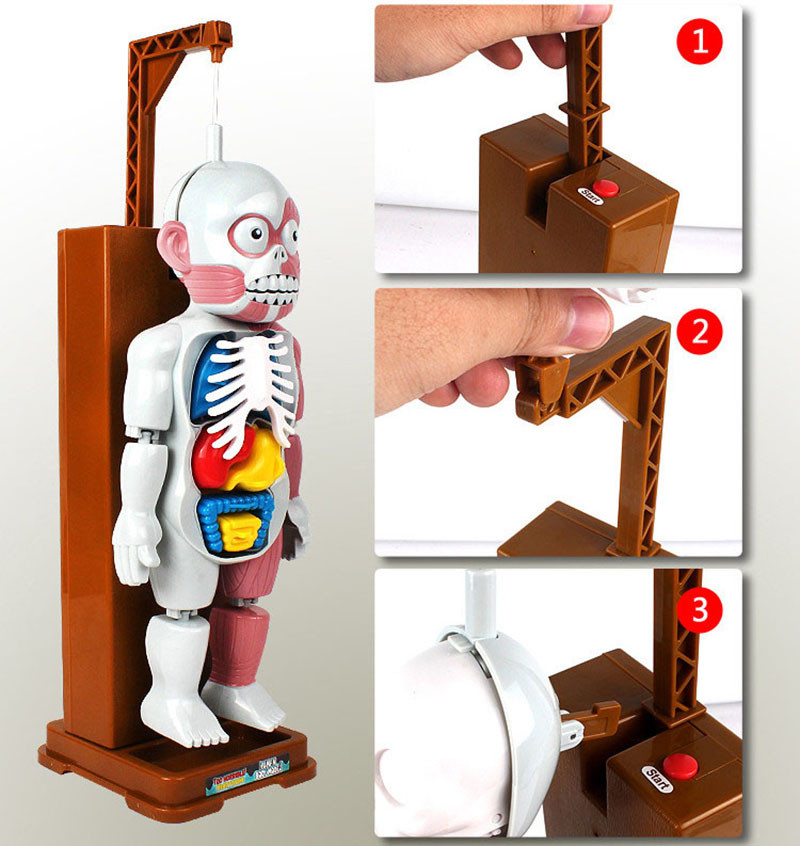 Funny Simulation Human Organs 3D Puzzles Assembled Scary Human Body Model Halloween Tricky Joke Toy Novelty & Gag Toys 6