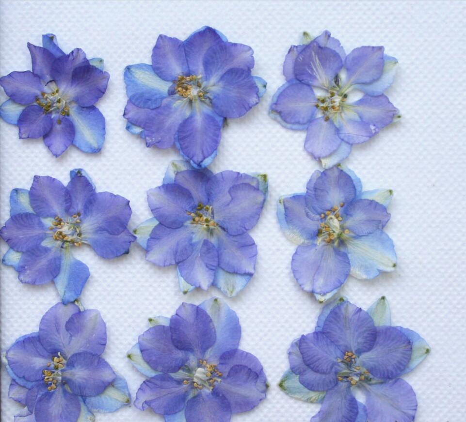fleur sec-achetez des lots à petit prix fleur sec en provenance de