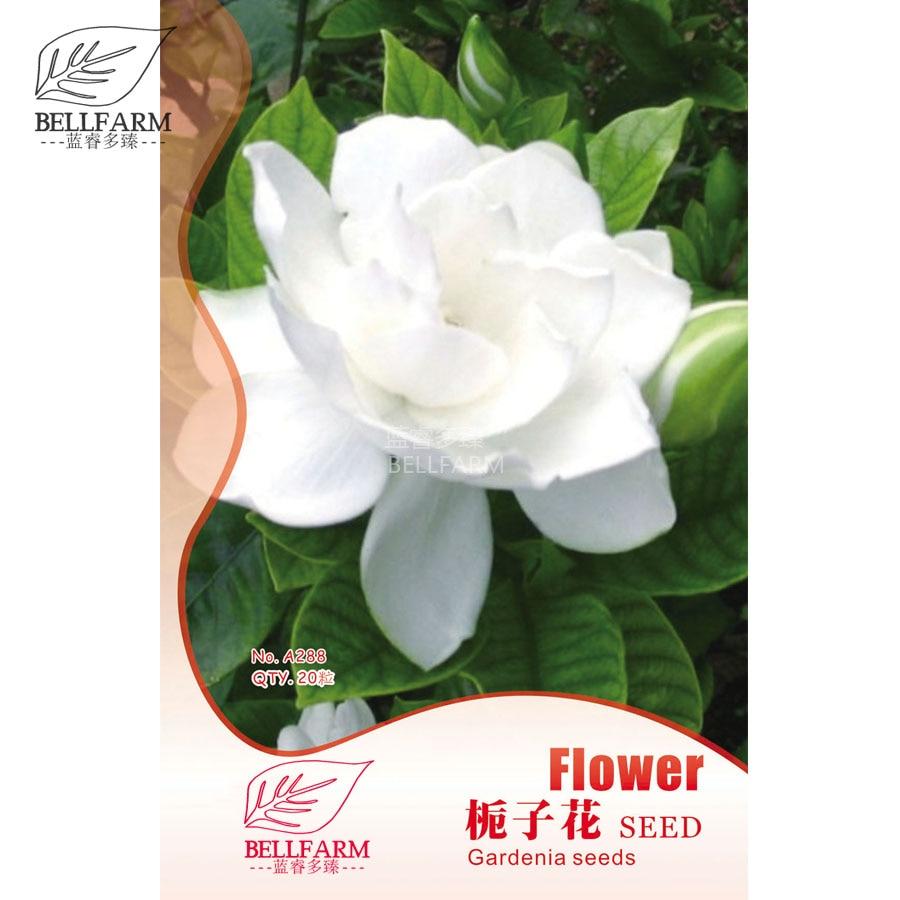 Buy Gardenia Jasmine And Get Free Shipping On Aliexpress