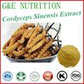 Pure Cordyceps extract/yarsagumba powder/cordyceps sinensis mycelium powder 50g