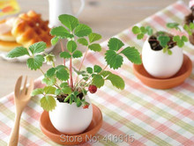 Creative Office Planting Potted Mini Green Novelty Lucky Egg DIY Potted Plants Cultivated Desktop Micro Landscape Bonsai Seeds(China)