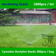 Widely Cultivated Cynodon Dactylon Seeds 1800pcs, Family Poaceae Bahama Grass Green Gardening Seeds, Natural Bermuda Grass Seeds
