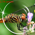 Lente Para Os Olhos Miopia Lentes de Resina 1.74 Asféricas Ultra Fino-600 a-1000 Top Qualidade Óculos Anti Blue Ray Lense Para Homens mulheres
