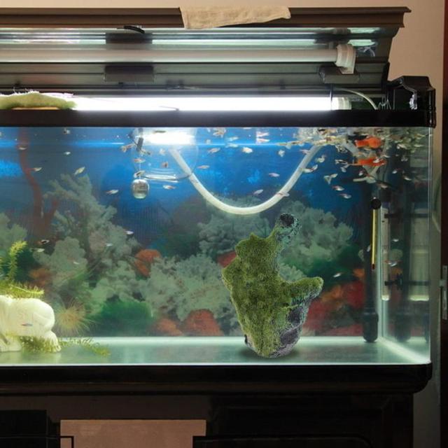Home fish tanks aquariums Tell