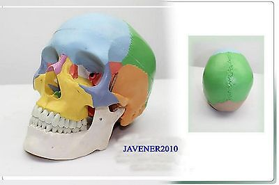 NewLife Size Human Anatomical Anatomy Head Skull Skeleton Medical Model Colorful mini skull human anatomical anatomy head medical model human anatomical skull model model of the medical skull painting model