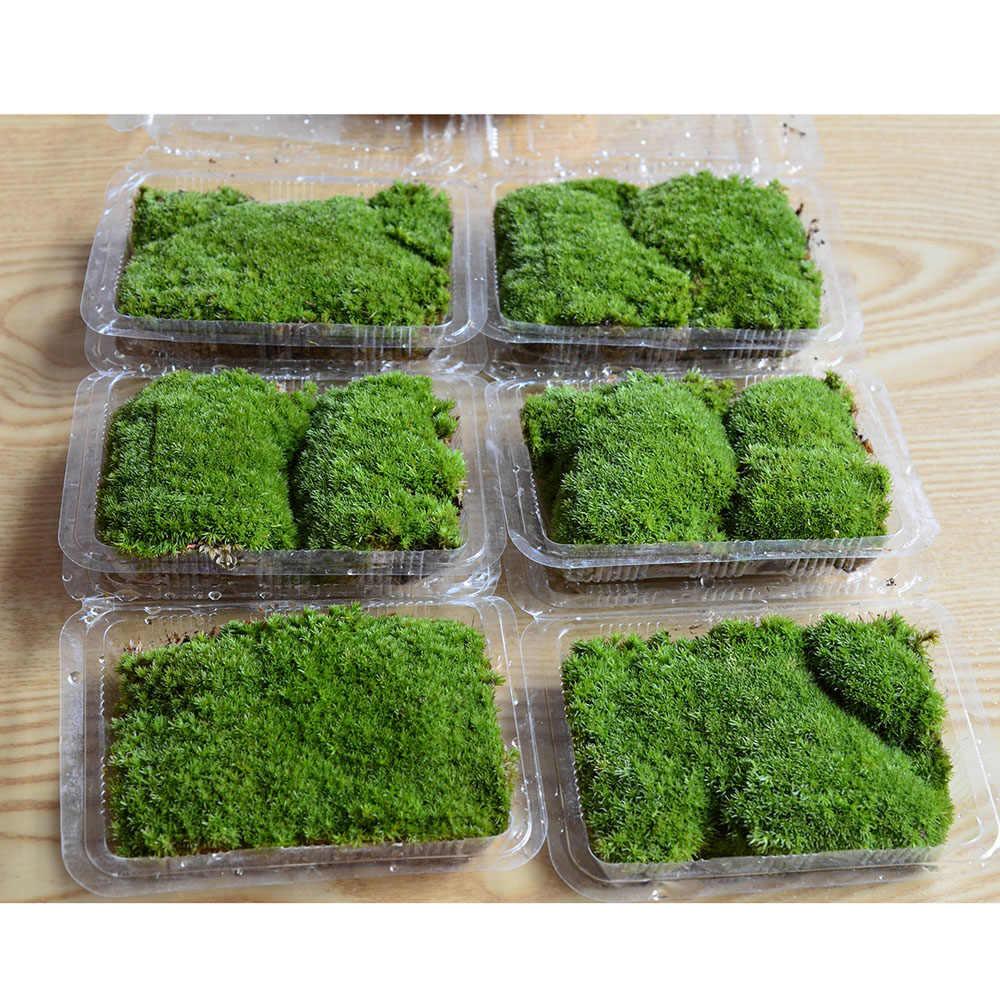 1 sacchetto Verde Muschio Artificiale Decorativa Mestieri di Casa Ornamento Bonsai Succulente Gnomes Micro Paesaggio Decorazione