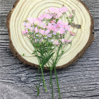 Newest Pink Starry Natural Dried Pressed Flower For Party Festival 80Pcs Free Shipment