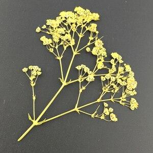Image 5 - 10 ชิ้น/ล็อตแห้งสาขาดอกไม้ตัวอย่างบุ๊คมาร์ควัสดุ DIY การ์ดดอกไม้ภาพวาดอุปกรณ์เสริมสำหรับงานปาร์ตี้ตกแต่ง