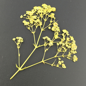 Image 5 - 10 stks/partij Gedroogde Bloem Takken Specimen Bladwijzers Materiaal DIY Card Pressed Flower Schilderijen Accessoires voor Party Decoratie