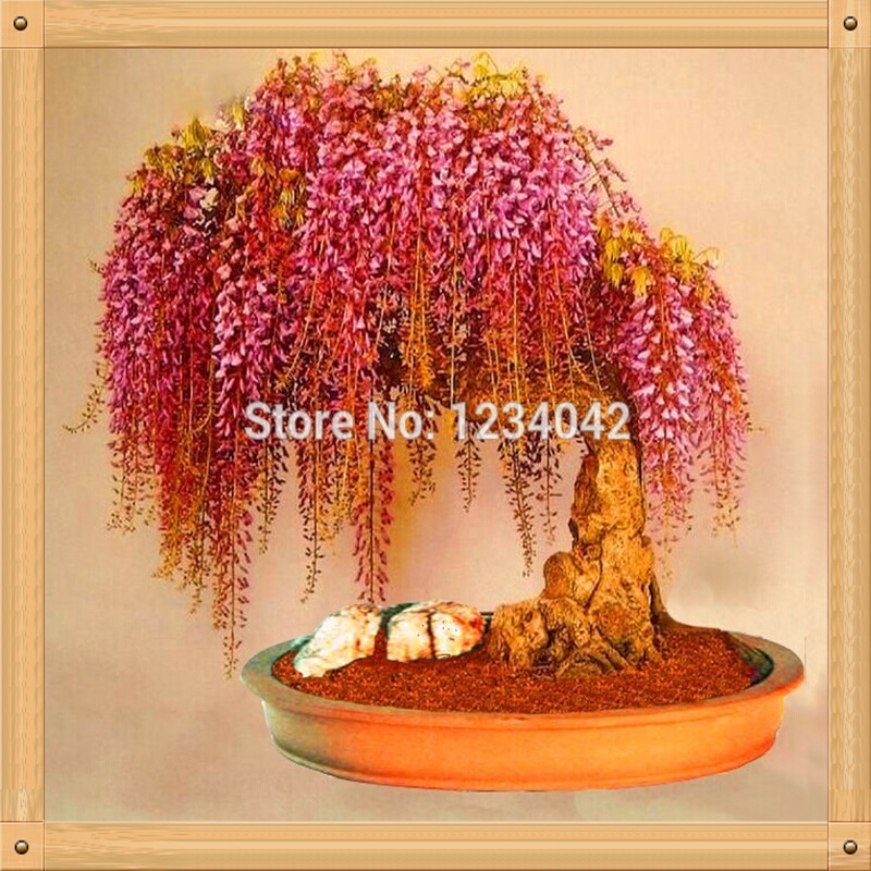 Brussel's bonsai nursery coupon code