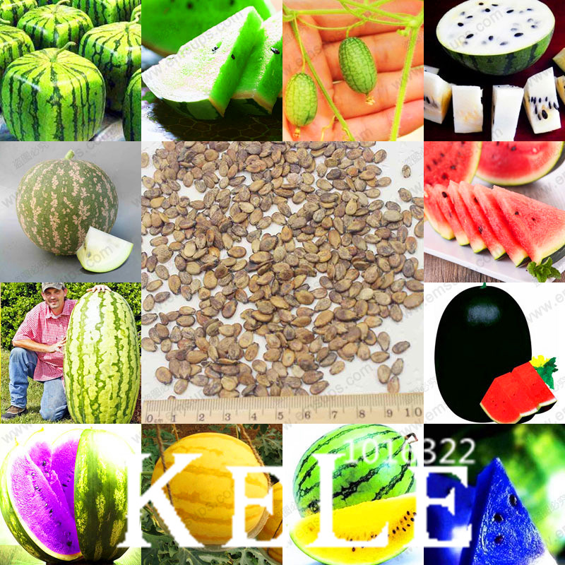 Best-Selling!12 Kinds Rare Chinese Watermelon Garden, Delicious Fruit Water Melon Plantas Bonsai Plants - 50 Pcs/Bag,#7O30C7