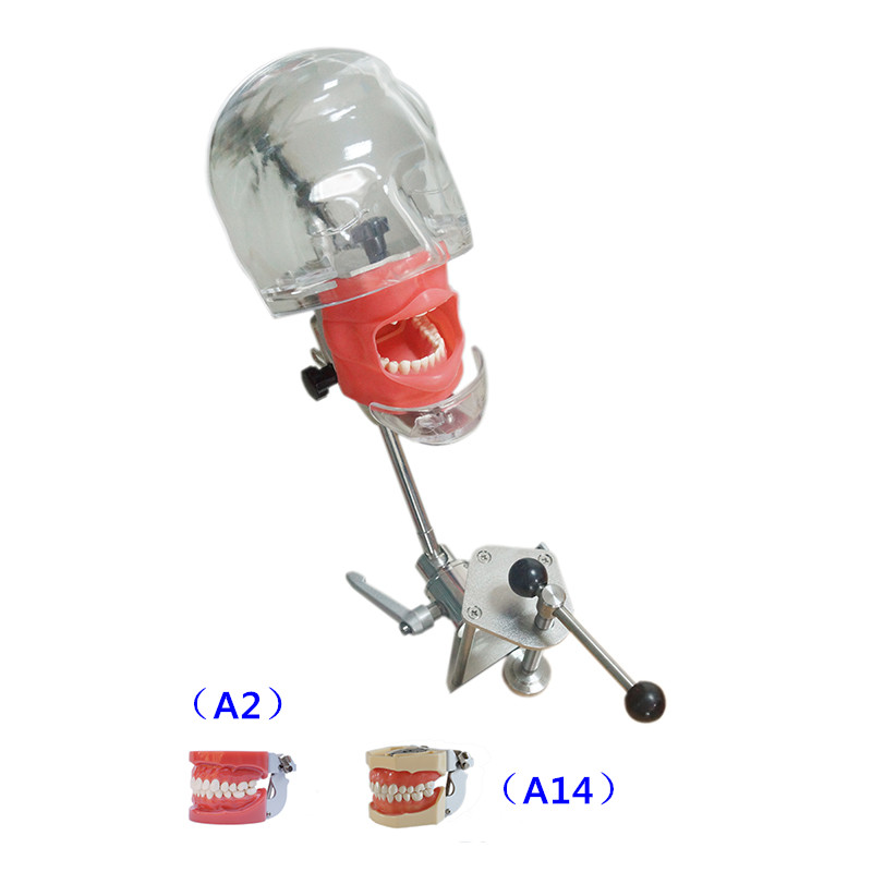 Simulador Dental Nissin maniquí cabeza phantom Dental cabeza modelo con nuevo estilo Banco montaje para dentista educación