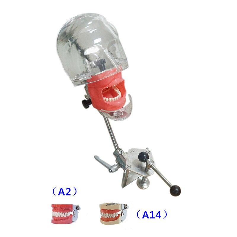 Simulateur dentaire Nissin mannequin tête fantôme Dentaire modèle de tête fantôme avec un nouveau style banc montage pour l'éducation du dentiste
