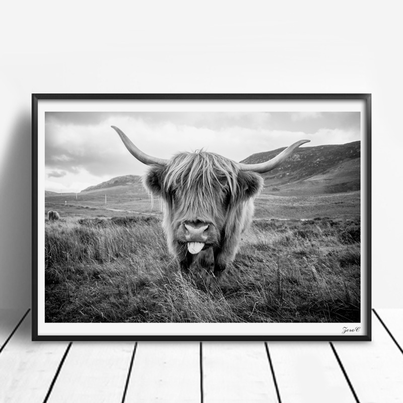 48c2ab6ff7a Highland cattle canvas art posters and prints painting