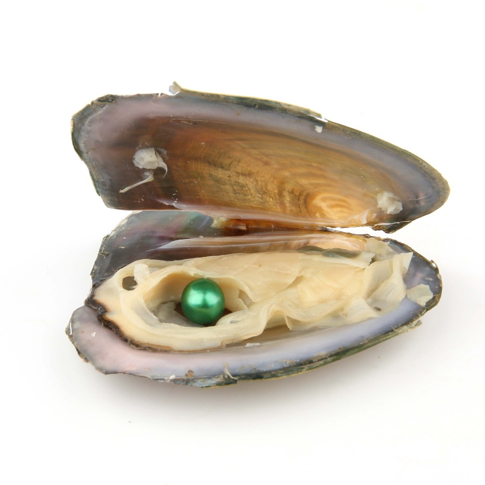 Freshwater Round Oyster Pearl Cultured Oysters with Pearls Inside 20 PC 6.5-8mm