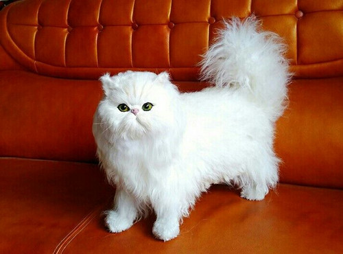 white simulation cat polyethylene & fur standing Persian model gift about 45x35cm172 simulation cute squatting white cat 35x15cm model polyethylene