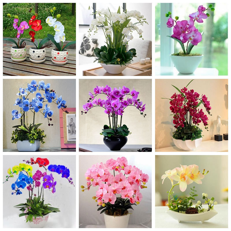 120 Pcs Rare Black Orchid Plants High Simulation Flower Phalaenopsis Orchid Plants Perennial Flowers Garden Butterfly Orchids