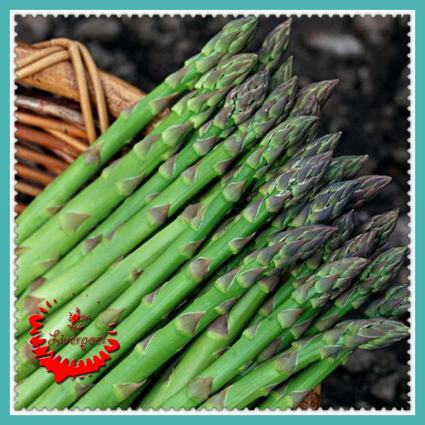 Best Place To Plant Asparagus: Online Buy Wholesale Asparagus Plants From China Asparagus
