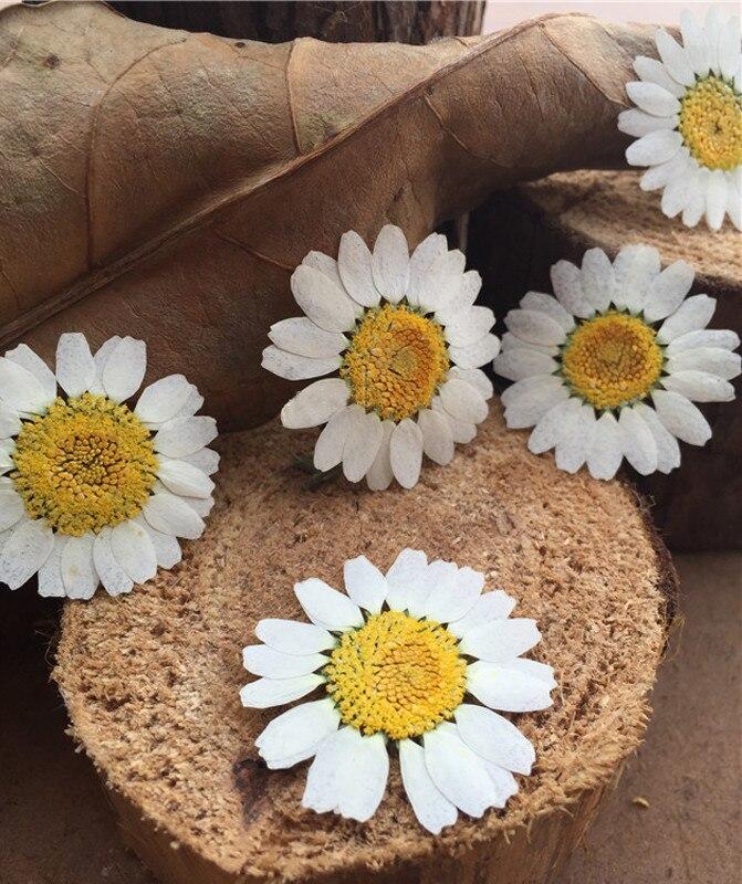 Засушенные цветы, образцы, красящие белые хризантемы для творчества, Детские Обучающие растения ручной работы, сырье 1 лот/120 шт.