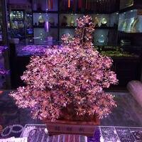 Натуральный турмалин Счастливое дерево богатых дойная корова кристалл дерево фиолетовый песчанистый таунхаус фэн шуй