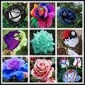 200 шт./пакет редких разноцветные розы семена радуга роза семена бонсай цветок семена черная роза редкие балкон растений для дома сад