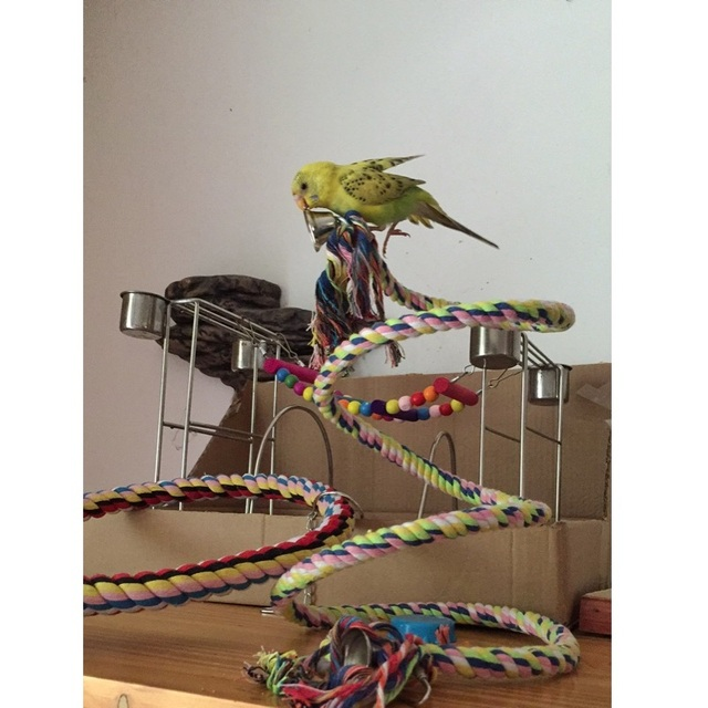 160cm Long Parrot Bird Toys Pet Bird Parrot Standing Rope Bird Cage Decoration Climbing Toy Parrot Bird Cage Toys Rope Bell