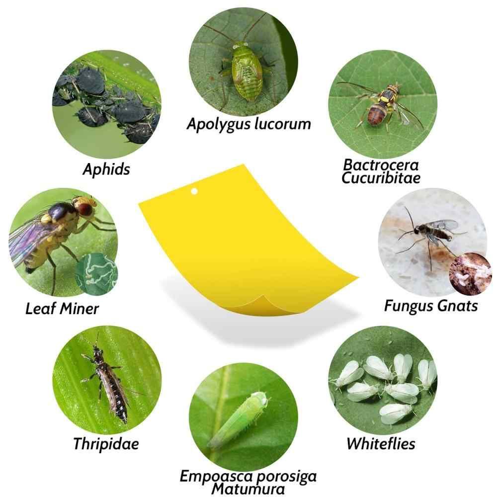 25X20 Cm Fruit Fly Trap Insecten Killer Sticky Boord Ongediertebestrijding Catcher Vliegt Vallen Voor Keuken Farm Plant tuin