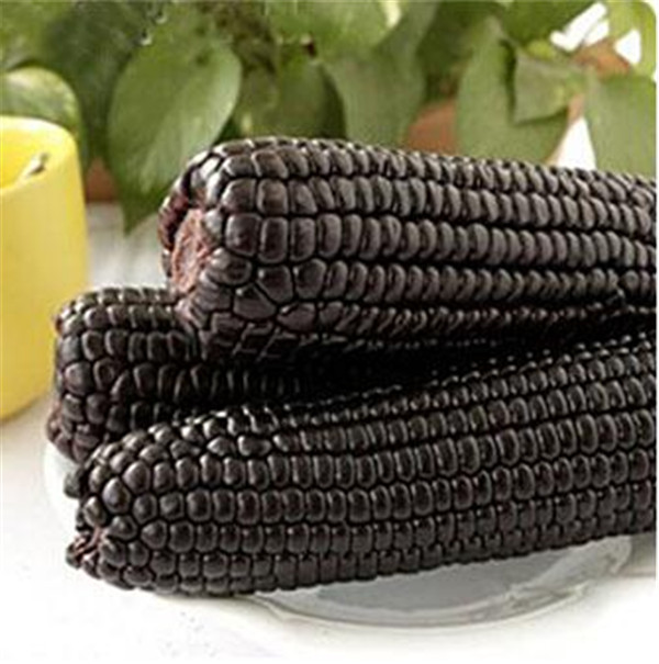 20 pcs Black Waxy Corn Bonsai vegetable Plant corn grain cereals Planting is Simple Organic Vegetable for home garden in Bonsai from Home Garden