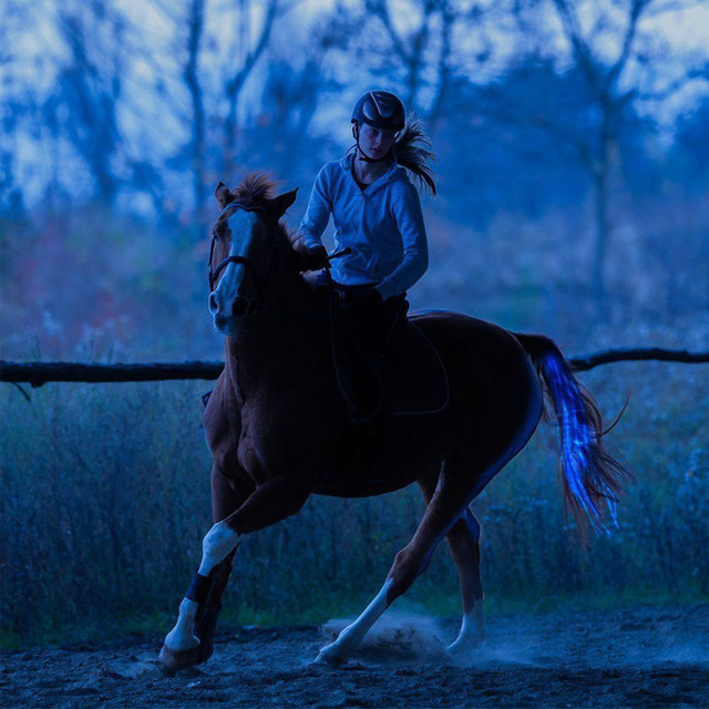 Horse Equipment Riding Tail Equestrian LED Flashing Light Bar Harness  6