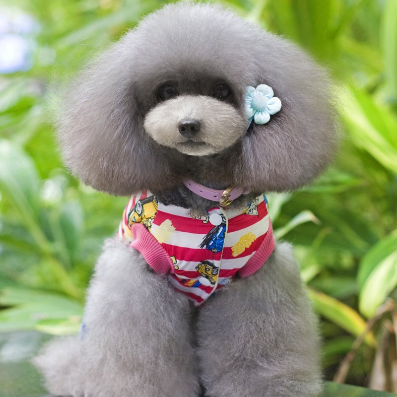 New winter fashion pet cotton clothes car printing dog clothes Teddy puppy clothes Pet supplies Four-leg link dog coat