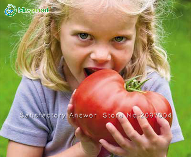 Loss Promotion 100PCS Rare Giant Tomato seeds, Vegetable Seeds, Giant Hybrid Non
