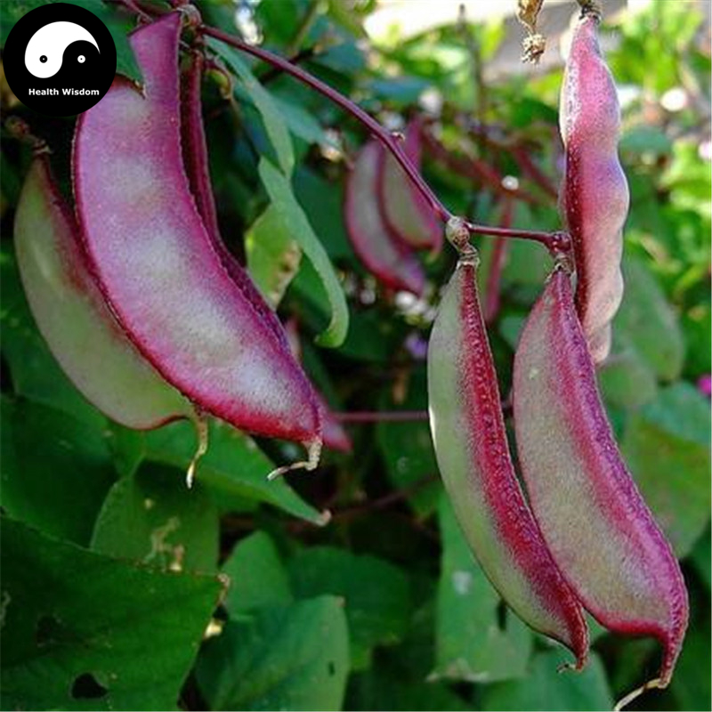 Buy Purple Lentils Beans Vegetable Semente 200pcs Plant Hyacinth Bean Lablab Purpureus ...